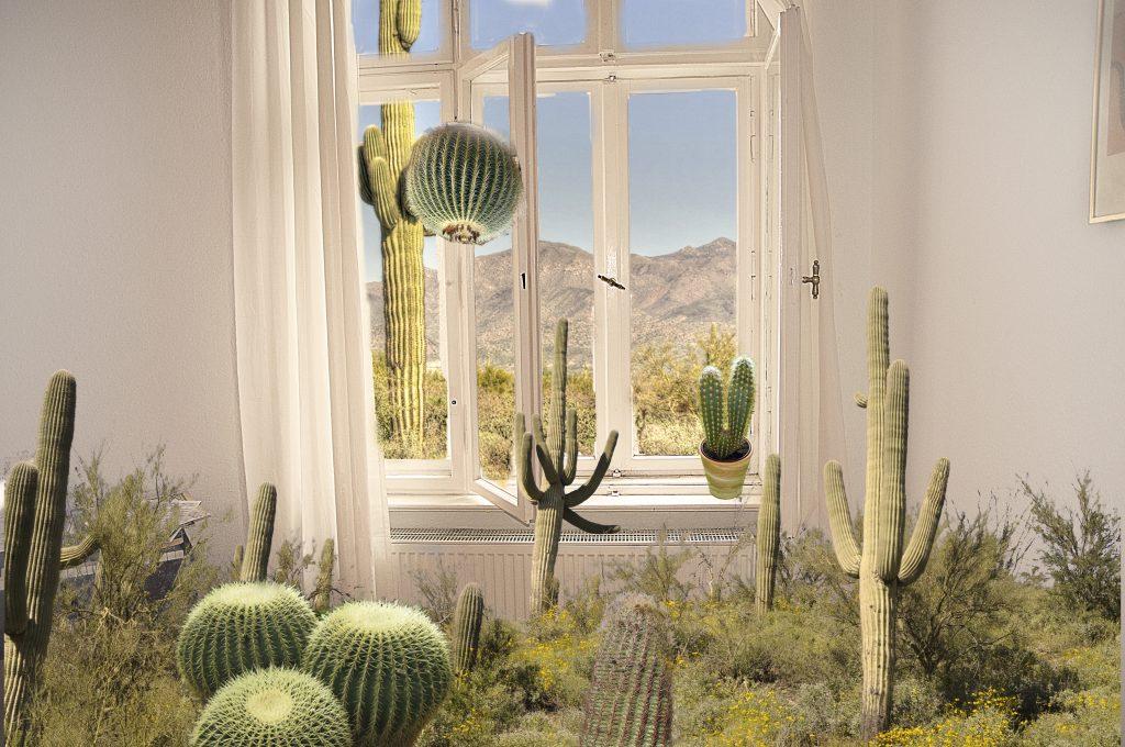 kaktuszimmer
